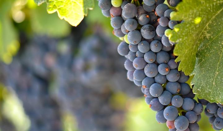 San Silvano Merlot Vino Rosso