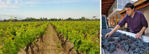 Wijngaarden Los Boldos