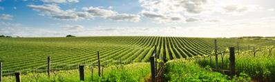 Wijn uit zuid Frankrijk