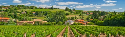 Wijn uit Beaujolais