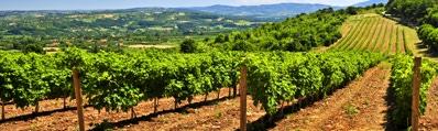 Wijn uit Calatayud
