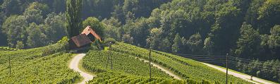 Wijn uit Slovenië