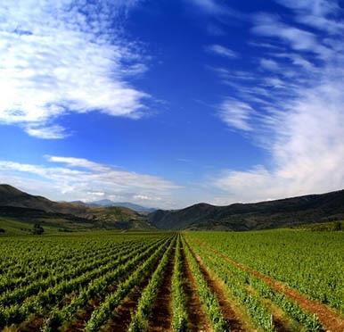 Wijn uit Argentinië